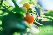 WM Garden-6